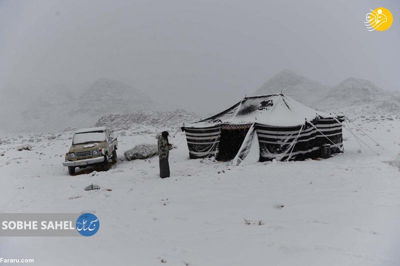 شادی مردم عربستان از بارش برف+ تصاویر