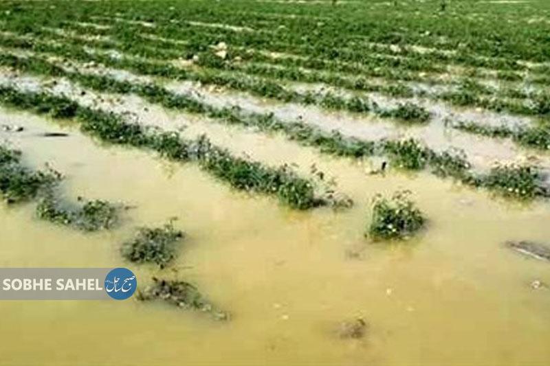 خسارت ۴.۹ میلیارد ریالی بارشهای اخیر در حوزه جهاد کشاورزی قشم