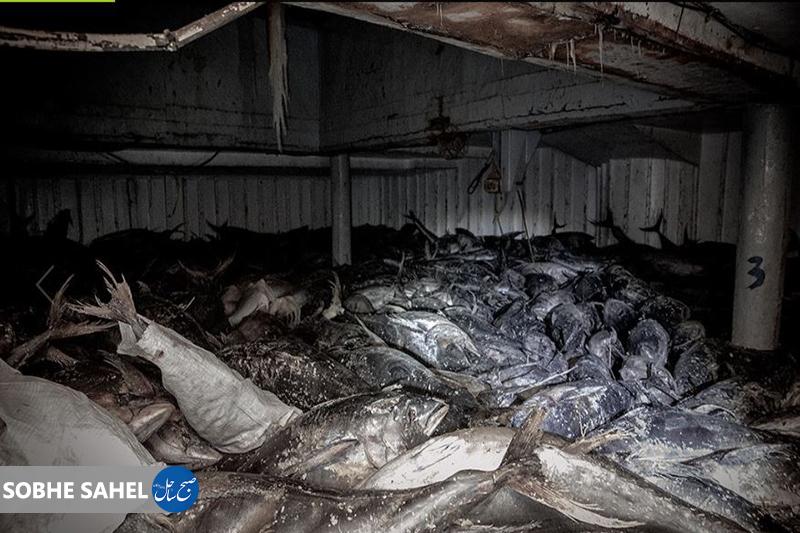 توقیف ۳ فروند شناور ترال در شرق هرمزگان دستگیری ۵۳ نفر به اتهام صید غیرمجاز