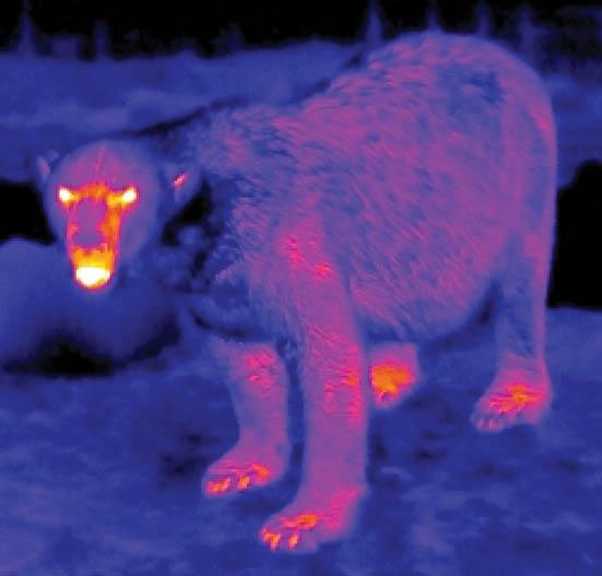 نامرئیشدن خرسها در شب و بارش باران الماس!