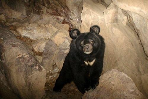 توله خرس سیاه آسیایی در پارک طبیعت بندرعباس خفه شد