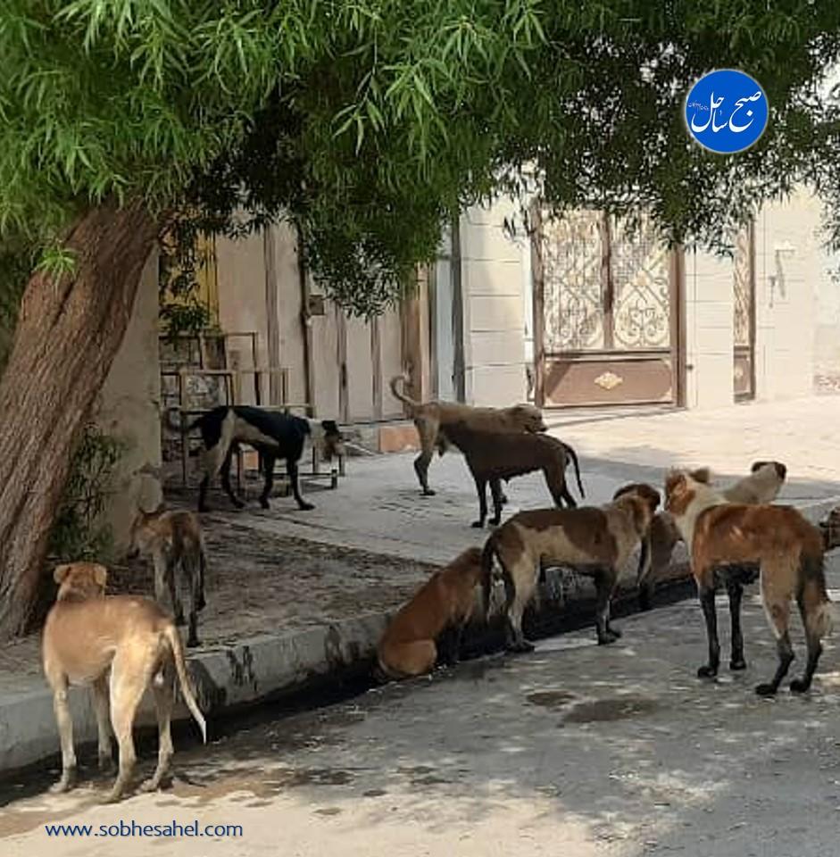 گلایه یک شهروند از جولان سگهای خیابانی در شهر