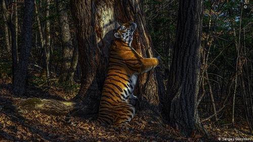 معرفی بهترین عکسهای سال از طبیعت