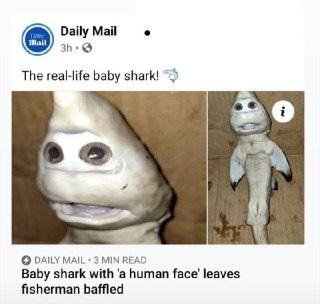 بچه کوسه ای که صورتی شبیه به انسان دارد!