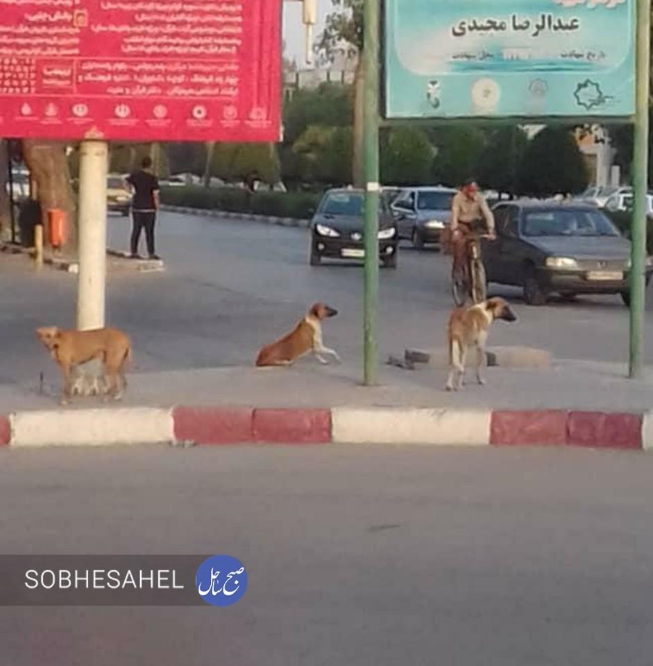 سگهای بلاصاحب همچنان سرگردان در بندرعباس